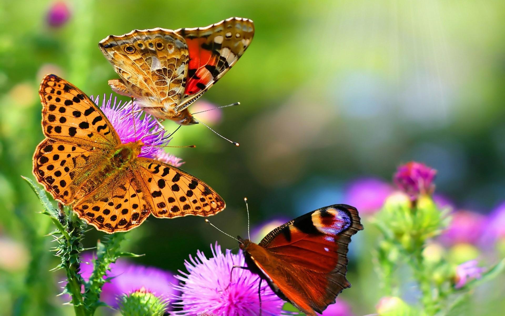 Farfalle-Fiori-1200x1920